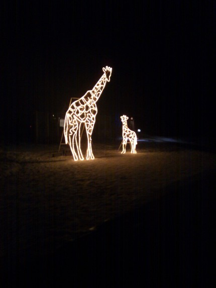 Calgary Zoo Lights 2012 Giraffe