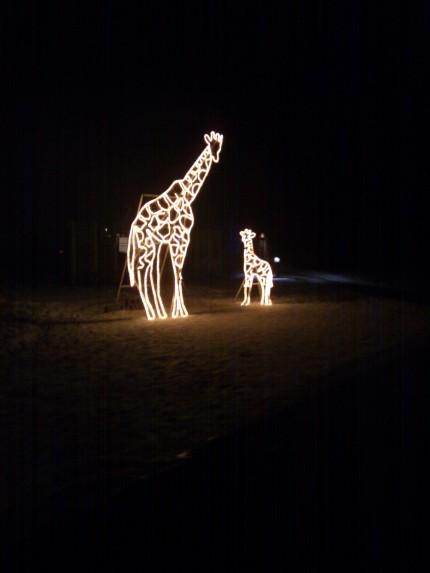 Calgary Zoo Lights 2012 Giraffe